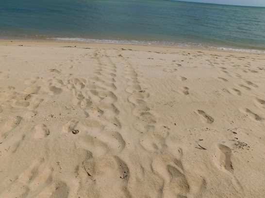 Jardine River Mouth- Turtle Tracks