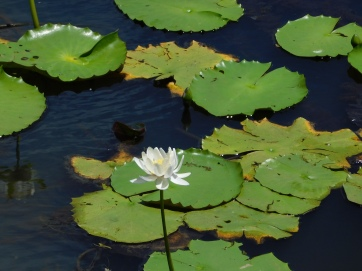 Keatings Lagoon (4)