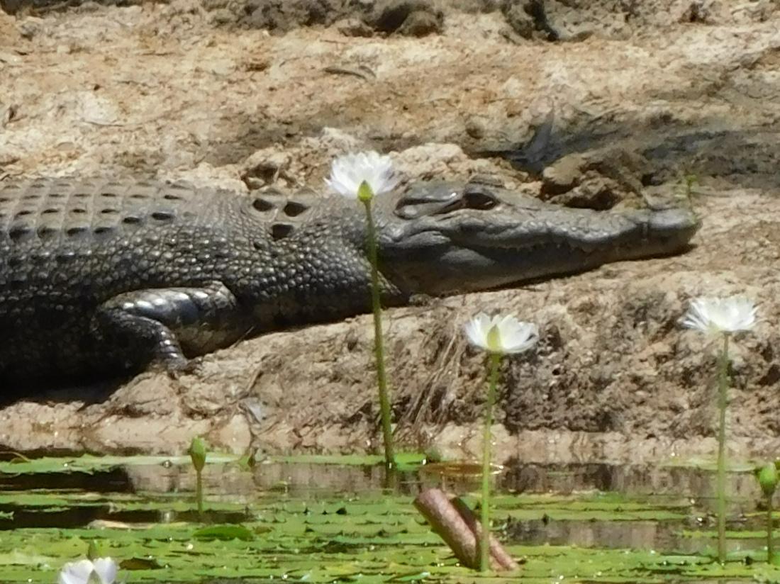 Keatings Lagoon (7)