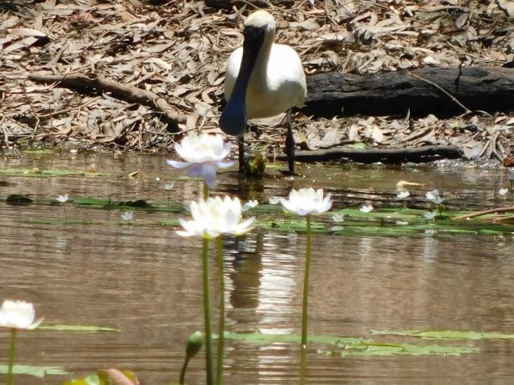 Keatings Lagoon (8)