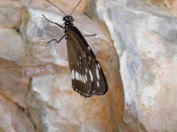 Limmen N.P- Butterfly Falls (4)