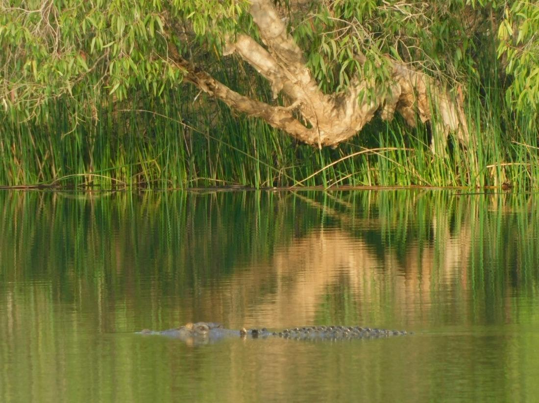 Limmen N.P- croc