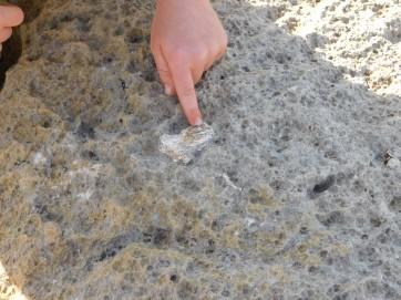 Riversleigh Fossils (2)