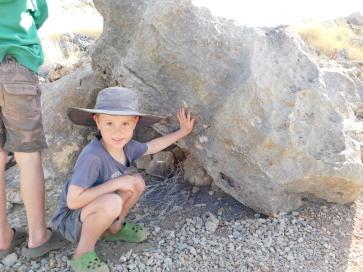 Riversleigh Fossils (3)