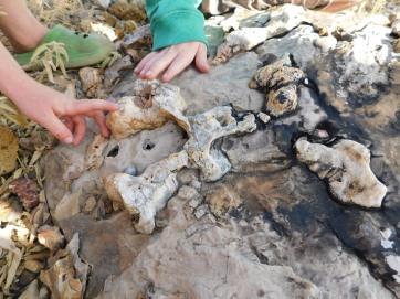 Riversleigh Fossils (7)