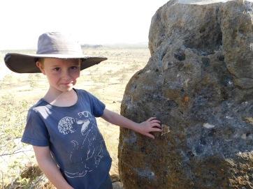 Riversleigh Fossils
