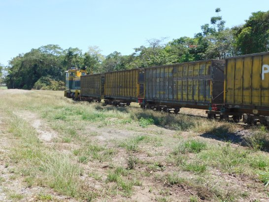 Sugar Cane Train.