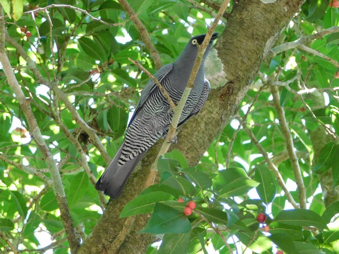 Bird- Eacham