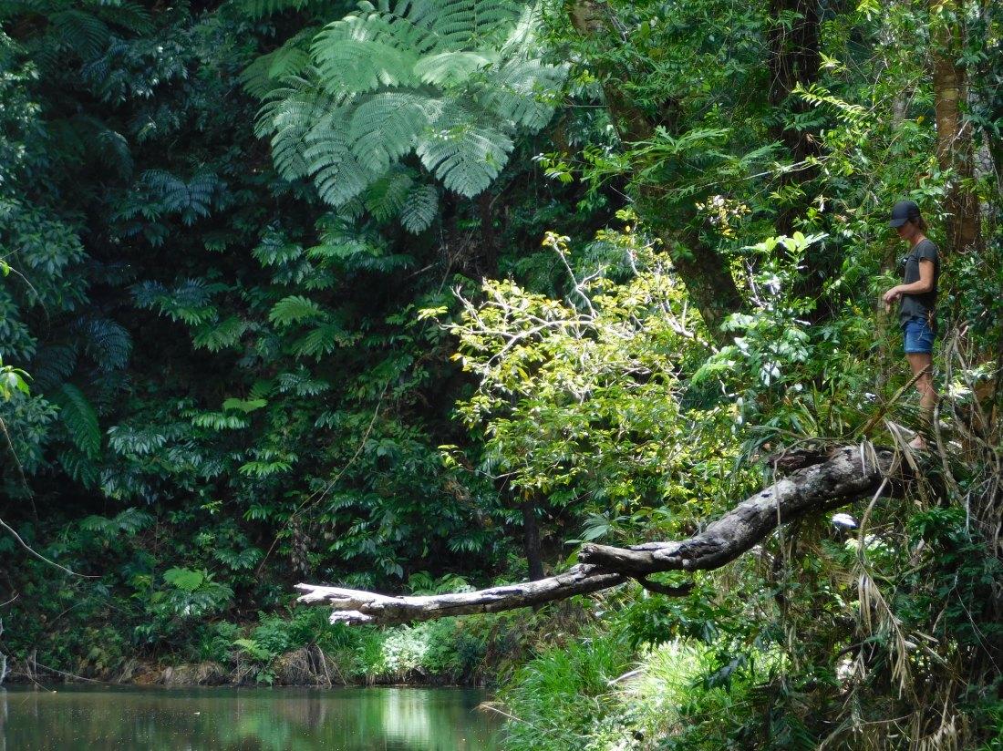 Tinaroo Rainforest Walk
