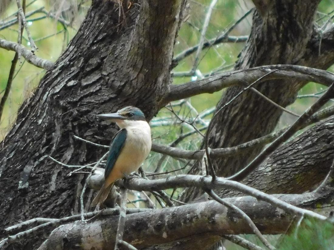 Bird Inskip