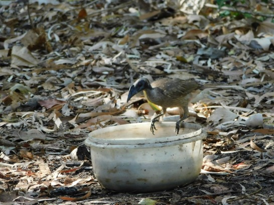 Cape Hillsborough- Birdbath (3)