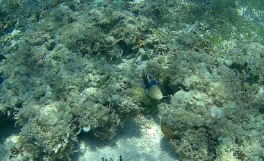 Green Island fish