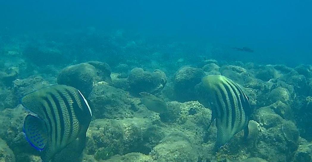 Green Island fish6